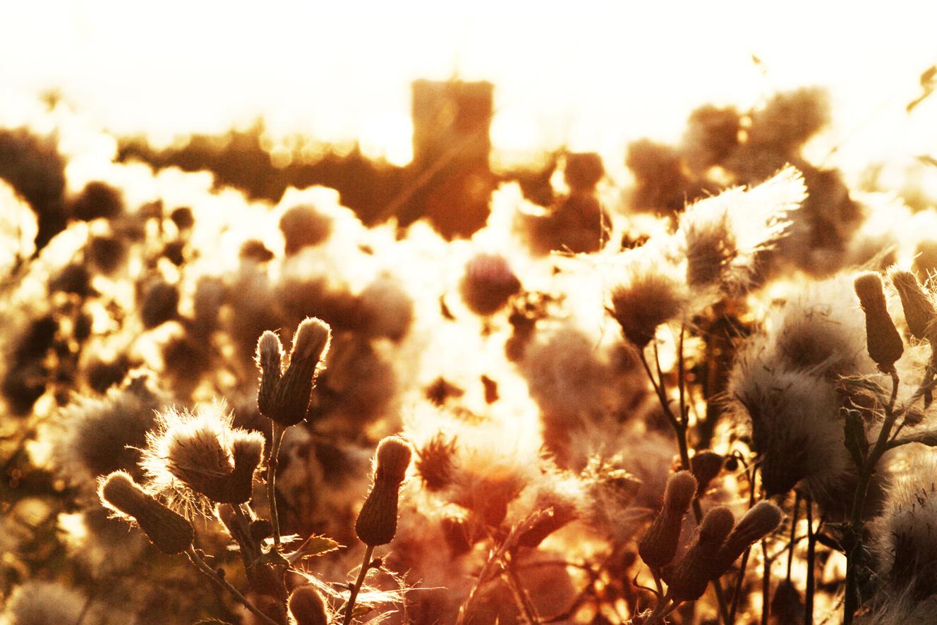 Sommer, Sonne, Sommer!!!