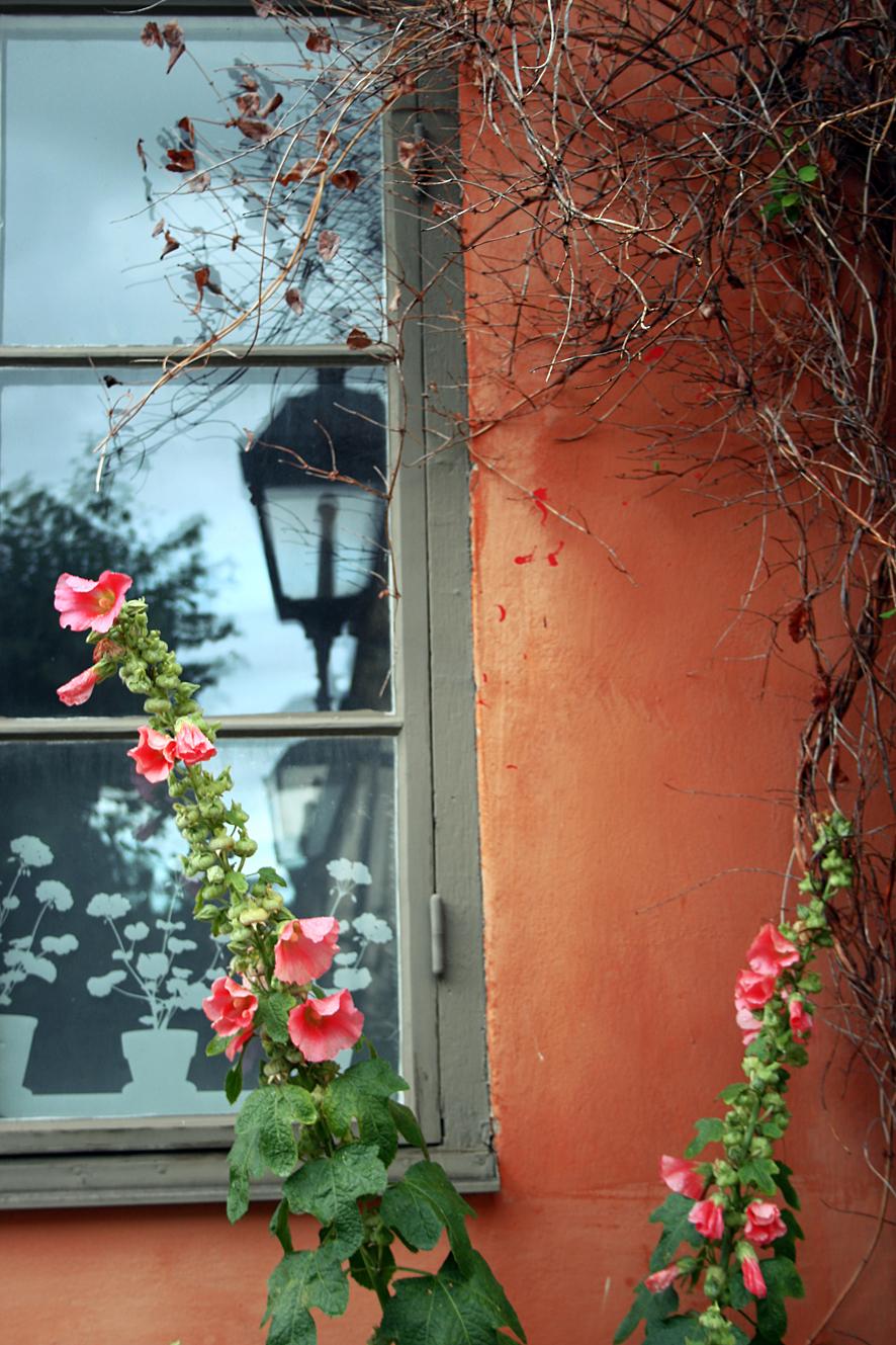 Stockrose, Fenster und Laterne